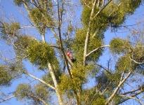pomuzeme-stromu-nasbirame-jmeli