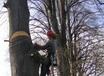 Kaceni havarijniho stromu v MS II.