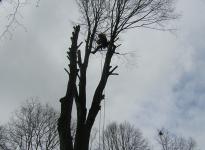 Kaceni havarijniho stromu v MS